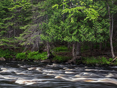 Riffles (Kevin Pihlaja) Tags: sturgeonriver upperpeninsula michigan river water trees woodland forest foliage rock waterflow landscape nature explore summer