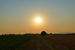Over The Fields (ivlys) Tags: biebesheim sonnenaufgang sunrise felder fields odenwald landschaft landscape natur nature ivlys