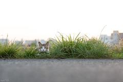 猫 (fumi*23) Tags: ilce7rm3 sony fe85mmf18 sel85f18 apsccrop cat katze gato neko chat animal harbor port ねこ 猫 a7r3 bokeh
