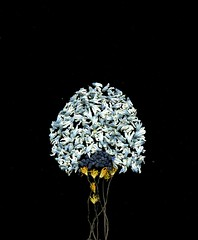 59063.01 Sanguinaria canadensis, Muscari, Puschkinia libanotica (horticultural art) Tags: horticulturalart sanguinariacanadensis sanguinaria flowers petals stamen bloodroot tree muscari grapehyacinth puschkinialibanotica puschkinia