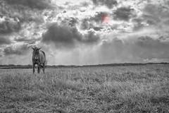 Horse (Isai Hernandez) Tags: horse caballo blackandwhite blancoynegro landscape clouds nubes nikon nicaragua