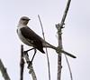 04-22-18-0013950 (Lake Worth) Tags: animal animals bird birds birdwatcher everglades southflorida feathers florida nature outdoor outdoors waterbirds wetlands wildlife wings