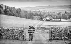 Bowlees . (wayman2011) Tags: lightroomcanon5d wayman2011 bwlandscapes mono rural villages gates people rambling drystonewalls pennines dales teesdale bowlees countydurham uk