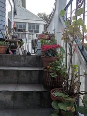 geraniums and nasturtium (Liz Henry) Tags: cameraphone