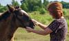 DSC_0937 (dmilokt) Tags: лошадь конь horse деревня village dmilokt