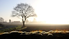 Nebel im Frühling (simson60) Tags: nebel morgennebel schleswigholstein felder mauer fog