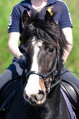 Brendan Head (Justin Akehurst Photography) Tags: nikond750 nikon70200f28e equestrian horse lesson gelding