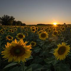 Bonne nuit (alexiscrozier1) Tags: champs sunset nikon passion photo amateur