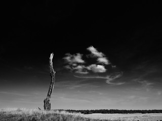 Death Tree Rest