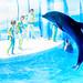 Jump! At the Dolphins and Sea Lions Show of Enoshima Aquarium, Fujisawa : イルカとアシカのショー(藤沢市・新江ノ島水族館)