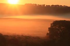 Sunrise over Scorhill (OutdoorMonkey) Tags: dartmoor scorhill northteignriver morning earlymorning sunrise sunshine sun orange wild wilderness remote moor moorrland mist tree plain silhouette grassland outside outdoor rural nature natural countryside devon