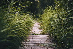walk (Strange Artifact) Tags: sony a7r omsystem ezuiko autot 128 100mm olympus beekbergerwoud nature green