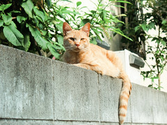 neko-neko2170 (kuro-gin) Tags: cat cats animal japan snap street straycat 猫