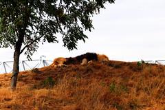 IMG_0753 (Bob_lewerissa) Tags: wildlands emmen zoo canon 80d 70200 l nonis usm