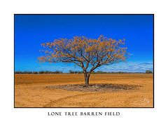 Tree standing in a barren field (sugarbellaleah) Tags: earth barren dry arid drought tree lone one growth yield agriculture industry outback australia dirt dusty remote countryside pretty vibrant sky leaves nature weather climate globalwarming environment waterlessclay