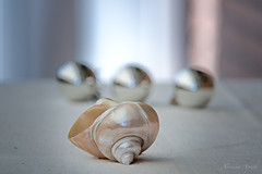 *** (adrianaaprati) Tags: summer august shell composition stilllife poetry blur bokeh