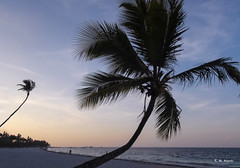 Reverencia - Bowing (R. M. Marti) Tags: palmeras playa atardecer mar agua arena palms beach sunset sea water sand punta cana dominican republic