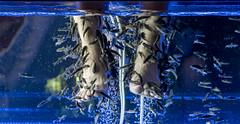 Cleaning (DROSAN DEM) Tags: europ pivo beer people girl woman reflection life world monde vie composition inspiration expression artistique art artistic couleurs colors couleur color naturel naturelle natural simplicité simplicity simple macrophotography patrón orgánico profundidad de campo brillante textura aire libre macrofotografía surrealista borde para fotos abstracto monocromático geometría redondo fondo negro círculo colección arquitectura playa arena mar cielo agua océano bahía bote roca berlin germany monocroma sunset puesta sol fish prague tailand