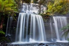 Russell Falls, Tasmania (jenni 101 - basically off until July) Tags: nikond7200 sigmaart18 photographybyjen longexposure waterfall russellfallstasmania