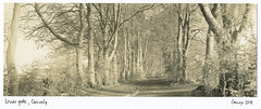 Lower gate Grovely (carwyn2) Tags: bw grovely wiltshire woods wilton shen hao 4x10 210mm fujinon ilford fp4 pyrocat splittoned selenium sepia salisbury lodima largeformat landscape darkroom contact