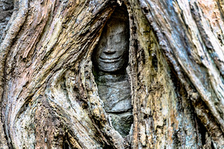 A Small Part of an Image of Buddha Is Seen between Opening of Roots Covering the Ta Prohm Temple, Cambodia-37a