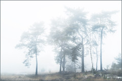 Fog in Maasduinen (Eva Haertel) Tags: eva haertel canon5dmarkiii natur nature bäume trees nebel fog mist mood stimmung entsättigt colors pastell winter strukrut structure holland landscape netherlands unschärfe blurr