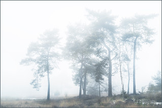 Fog in Maasduinen