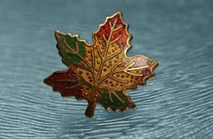 "Autumn leaf trinket (Millie Cruz ""On and Off"") Tags: leaf ripples autumn ""trinkets"" macromondays water macro trinket colorful orange canoneosrebelt6i ef100mmf28lmacroisusm glass pin"