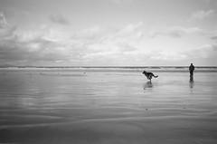 Dog Beach (D.R.M.S.) Tags: dog germanshepherd beach sky sea ocean man deutscheschaeferhund minolta 28mm iso100 film