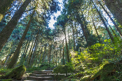 Harry_39570,阿里山,祝山觀日步道,森林浴步道,步道,阿里山國家森林遊樂區,國家森林遊樂區,嘉義縣,阿里山鄉,嘉義,森林,林業,伐木,林場,Alishan National Forest Recreation Area,Chiayi (Harry‧黃基峰‧台灣影像圖片) Tags: 阿里山 祝山觀日步道 森林浴步道 步道 阿里山國家森林遊樂區 國家森林遊樂區 嘉義縣 阿里山鄉 嘉義 森林 林業 伐木 林場 alishannationalforestrecreationarea chiayi 風景攝影 數位攝影 圖庫 黃基峰 harryhuang 台灣 臺灣 taiwan nikon d800 電子郵件信箱hgf78354ms35hinetnet 縮圖adobergb色域