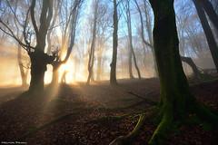 Fairytale Morning (Hector Prada) Tags: forest bosque light luz mist niebla fog bruma backlight contraluz moss musgo magic enlightened winter invierno paísvasco basquecountry
