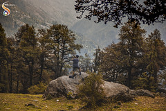 Mesmerisingly beautiful (Shikher Singh) Tags: himachal jaloripass trek trekker photographer pine jungle forest rock camera hills mountains shikhersimagery