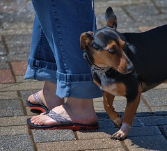 Distracted (Scott 97006) Tags: dog feet canine animal cute distraction