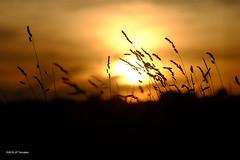 Soir (jpto_55) Tags: soir coucherdesoleil herbe xe1 fuji fujifilm omlens om135mmf28 hautegaronne france