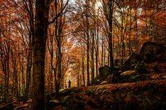 L' Autunno... (CettaCaracciolo ( nei ritagli di tempo )) Tags: autunno concettacaracciolo foglie lautunnotingedirosso ilcoloredellefoglie nikon alberi sentiero