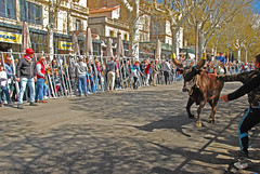 Feria Arles  El toro (Josiane D.) Tags: feria arles toro taureau abrivado festival provence france