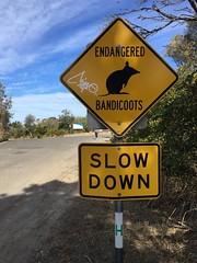 IMG_4043 (dudegeoff) Tags: northhead sydneyharbournationalpark sydney australia bikerides 2018 august winter 20180803sydnorthheadbikeride 20180804asydnorthheadbikeride