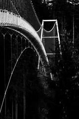 rope bridge (Wackelaugen) Tags: wildline badwildbad germany ropebridge bridge canon eos photo photography stephan wackelaugen black white bw blackwhite blackandwhite mono noiretblanc schwarz weis schwarzweis sommerberg schwarzwald blackforest