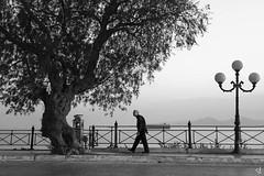 Just walking... (tzevang.com) Tags: old greece bw bythesea bwseascape tree tzertzinis tzevangcom sea oldman street sky piraeus loneliness