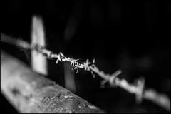 Sharp and rusty (G. Postlethwaite esq.) Tags: bw derbyshire radbournelane barbedwire beyondbokeh blackandwhite bokeh depthoffield fence monochrome photoborder selectivefocus winter fencefriday hss