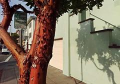 Solano Avenue at Madison Street, Albany, December 30, 2017 (/\/\ichael Patric {) Tags: albany california albanycalifornia solanoavenue sanfranciscobayarea bayarea eastbay tree shadow 90minuteparking address:postalcode=94706