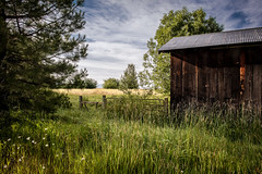 Fort Klamath, Oregon (paccode) Tags: solemn d850 landscape bushes brush serious quiet clouds forgotten oregon tree grass sky farm barn abandoned colorful field fortklamath unitedstates us
