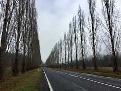 Life is a journey (PsJeremy - Lots to catch up after travelling...) Tags: winter poplar treeline bare barren cold dim grey