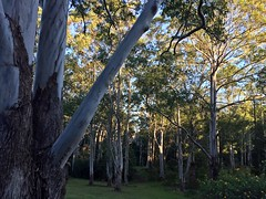 IMG_4889 (dudegeoff) Tags: 20180623bsydednahuntsanctuary ednahuntsanctuary eastwood nsw newsouthwales australia 2018 june winter bikerides trees 20180623csydednahuntsanctuary