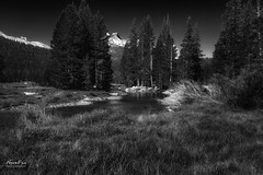 Tuolumne River (NormFox) Tags: bw bnw blackandwhite california creek forest landscape monochrome mountains outdoors peaceful quiet river rocks serene sky stream trail trees tuolumnemedows water yosemite wawona unitedstates us