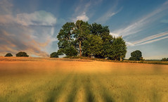 Landscape. (augustynbatko) Tags: landscape field nature trees sky clouds shadows tree grass view