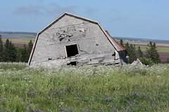 Old Barn in Barronsfield, Nova Scotia (Craigford) Tags: barronsfield novascotia canada old collapsing barn rural country