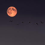 Flying in the Moonlight....