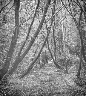 A walk through the trees.