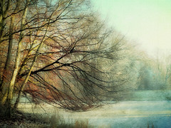 Haagse Bos 05 (Jan Backx) Tags: painterly